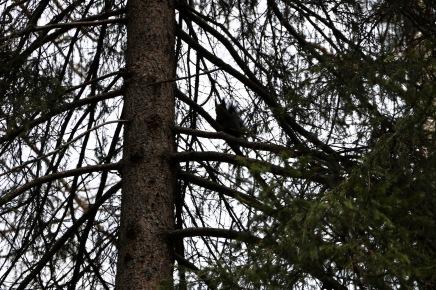 Ein Eichhörnchen beobachtet uns ...