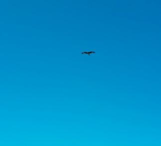 Ein Greifvogel - unser erster Mongolei-Moment
