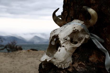 Am Baikalsees entdeckt: Der Totenkopf einer Kuh, geschmückt mit einem Stirnband. Wir sind überzeugt - das waren Schamanen ...