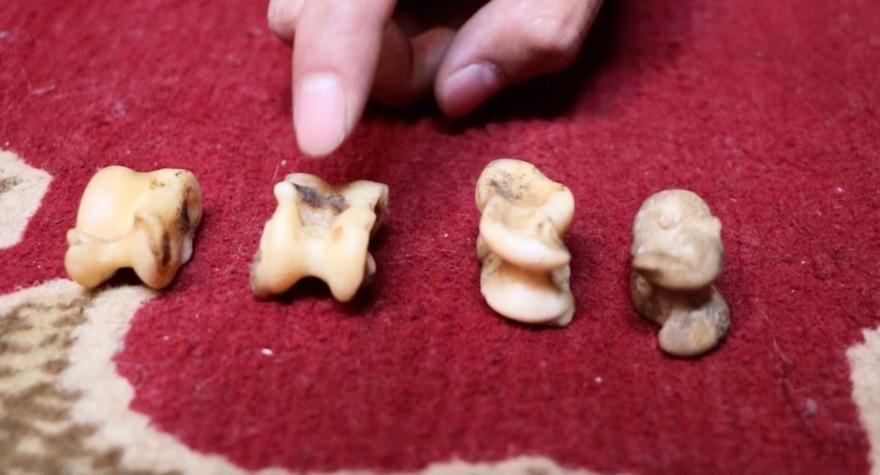 Erklärung Ankle-bone-Tiere