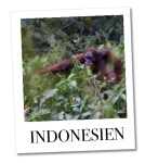 Polaroid_Indonesien