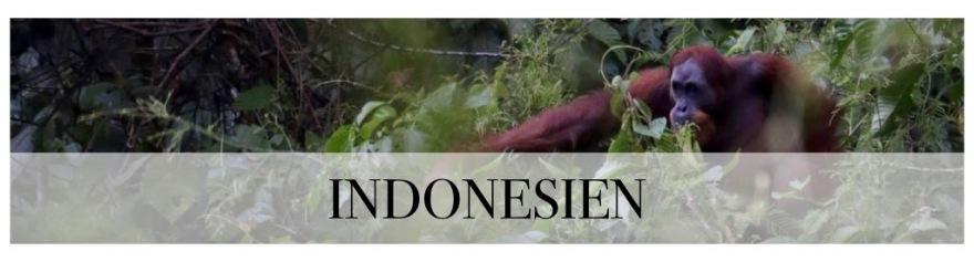 Teaser_indonesien.001.jpg