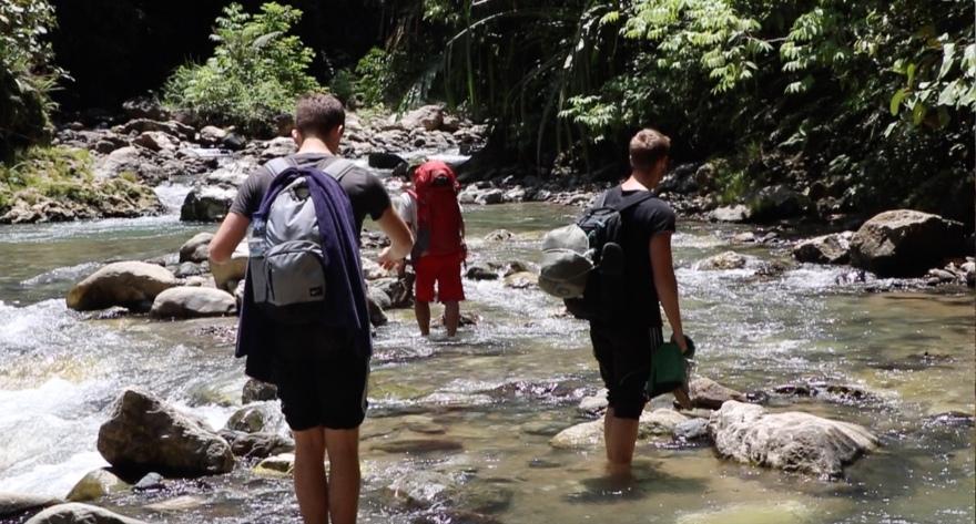 Fluss Dschungel