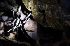 Spinne bei unserer Nachtwanderung