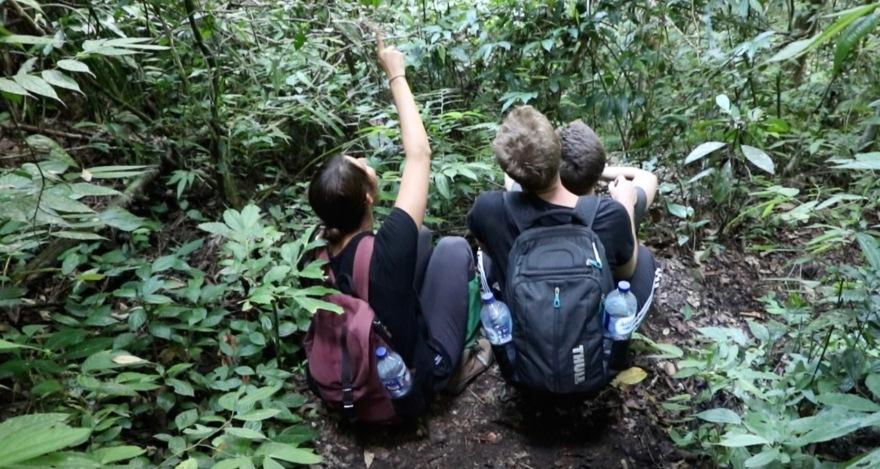 Orang-utan-zeigen.jpg