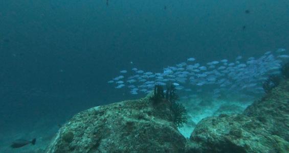 Fischschwarm bei Pulau Weh