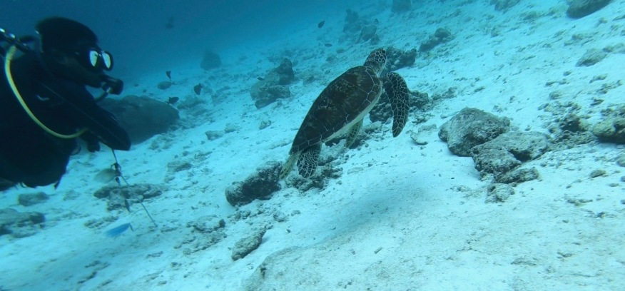 Eine Schildkröte <3