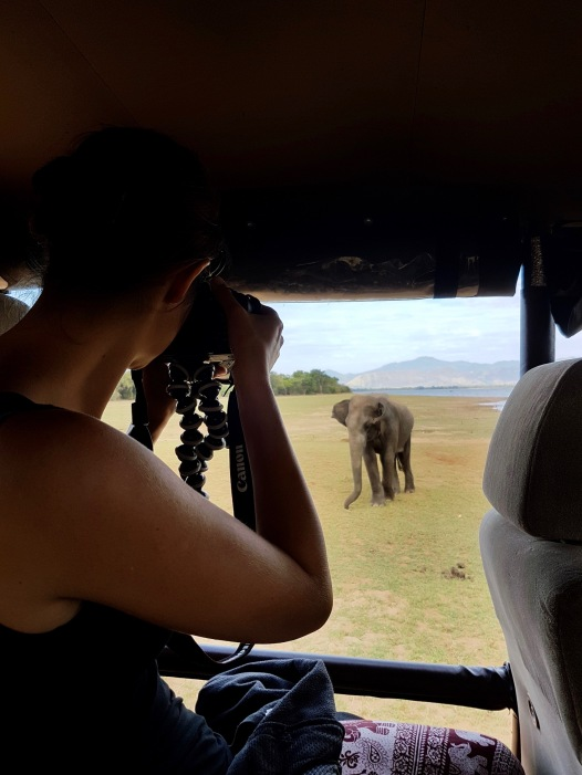 Elefanten im Udawalawe Nationalpark