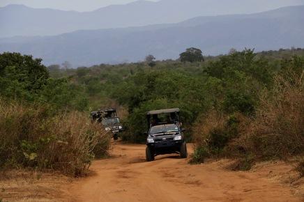 ... hallo Afrika ... ah ne, quatsch. Wir sind immer noch in Sri Lanka!