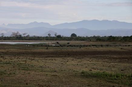 Wunderschöner Udawalawe Nationalpark