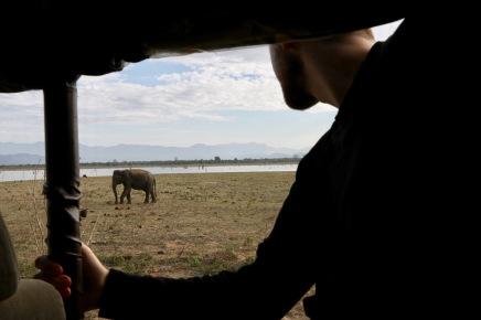 Unser erster Elefant! Und so nah!