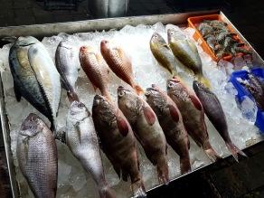 Frischer Fisch direkt aus dem Meer und ab auf den Tisch