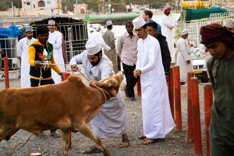 Nizwa Viehmarkt, Oman